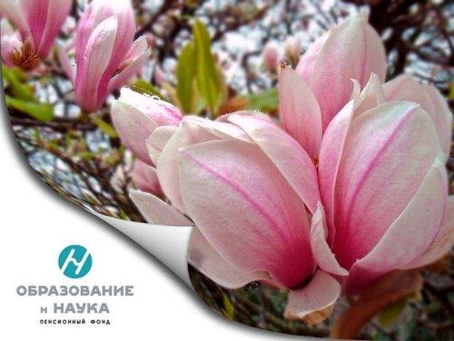 негосударственный пенсионный фонд поздравляет педагогов Чувашии с 8 марта