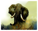 африка животные 0_50994_9c20ac77_S
