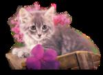 Кошки 5 0_50a03_f6099c25_S