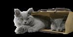 Кошки 5 0_50a10_115bbcca_S