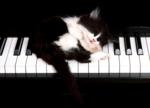 Кошки 5 0_50a18_536a32d3_S