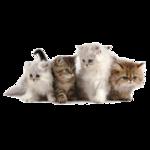 Кошки 5 0_50a20_3d15f6ff_S