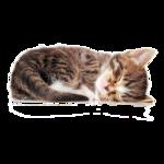 Кошки 5 0_50a2b_71a5e3c2_S