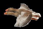 Птицы  разные  0_51c8d_f657eb42_S