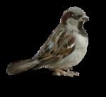 Птицы  разные  0_51c9f_baa02730_S