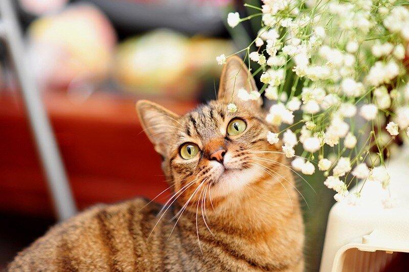 Кошки  0_52911_801f1284_XL