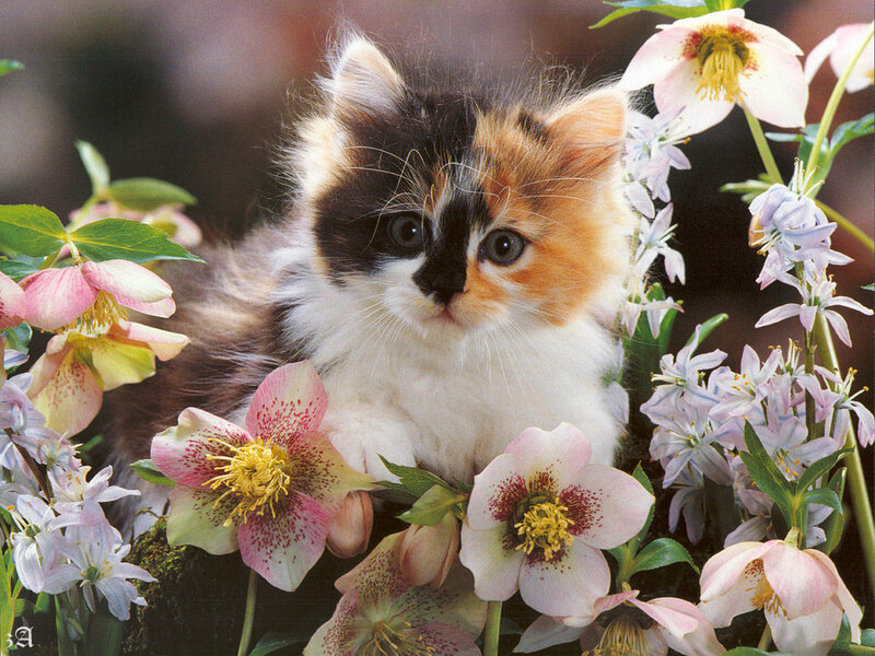 Кошки  0_52950_2fa7a712_XL