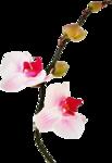 Домашние цветы 60
