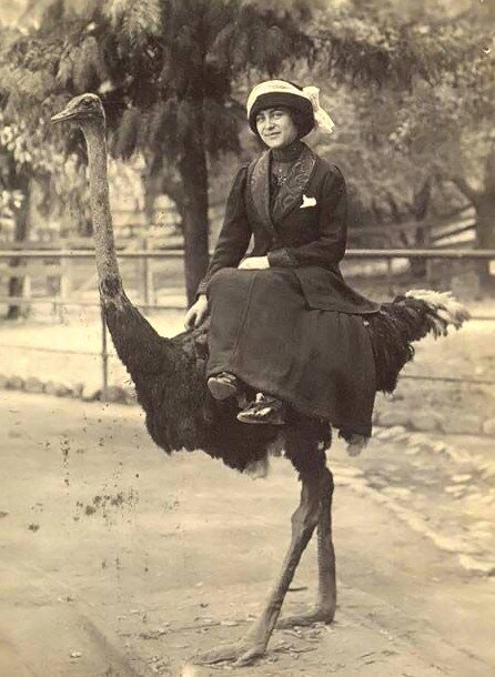 riding on an ostrich