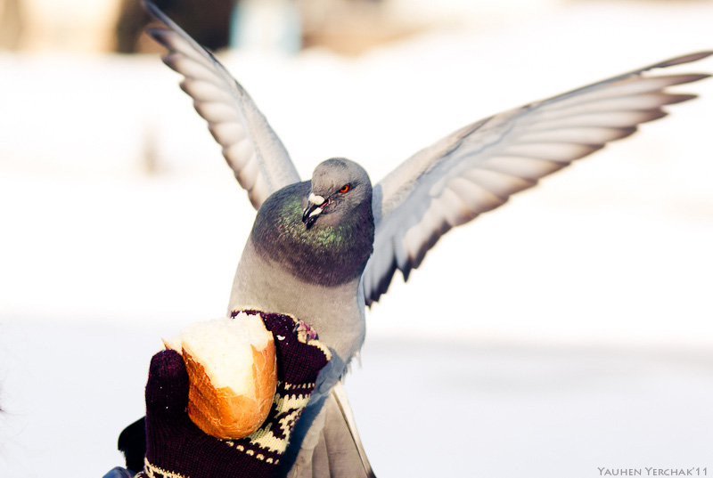 birds, photo, фото