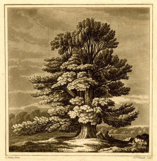 Эльм.  Печать Джошуа Gleadah после Джона Варли, 1818 .. JPG