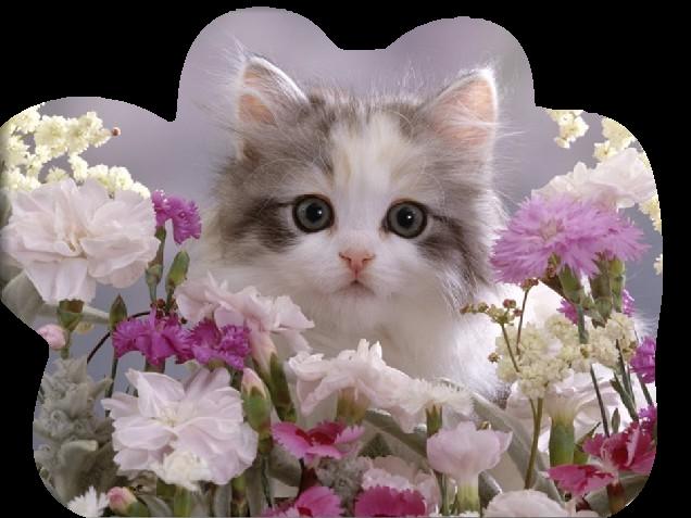 http://img-fotki.yandex.ru/get/4909/39663434.102/0_71666_d10ca37e_XL.jpg