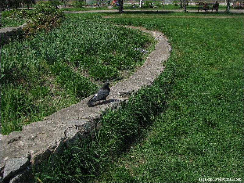 20120430-pigeon