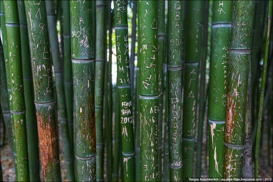 Надписи на бамбуке
