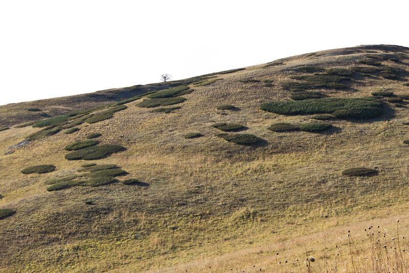 Нарымский хребет