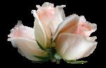366-flower-LB TUBES.png