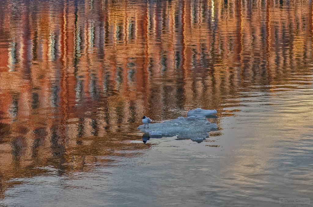 весна, река Мойка, отражения, вода, льдина, чайка