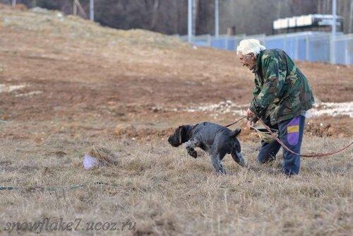 АНТЕЙ пробный пуск по перепелу Г.И.Ильин - апрель 2011г (6 мес)