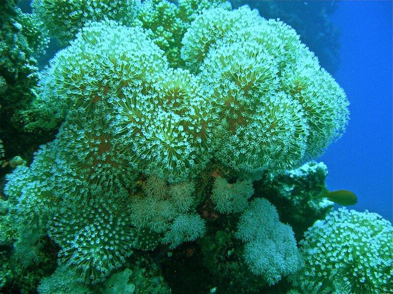 Подводные  Цветы