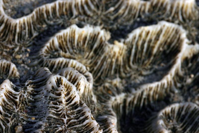 Коралловое сердце