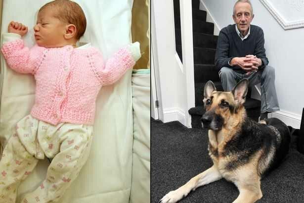 Собака спасла новорожденную от смерти