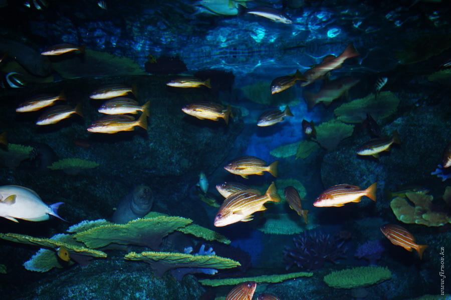 siam_ocean_world25_zps0200c691.JPG