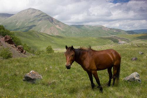 Кавказ, Приэльбрусье, горы, конь...