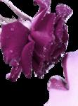 0278-rose-LB TUBES.png