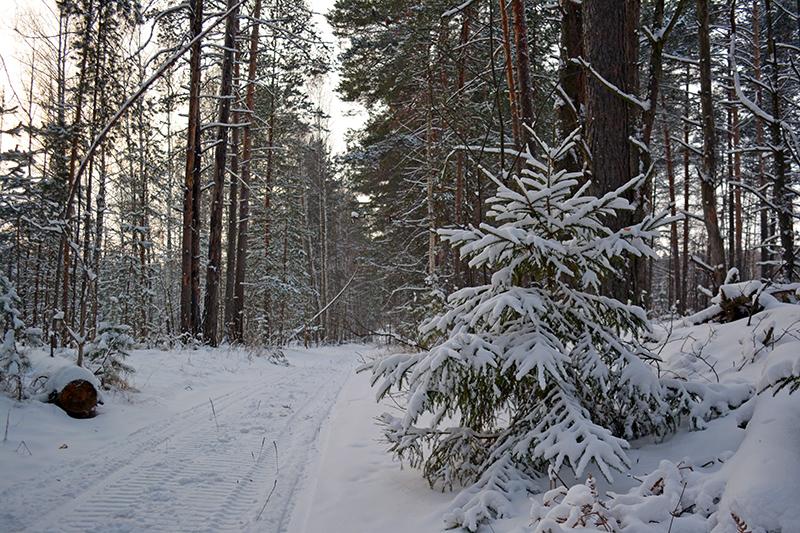 зимний лес 6