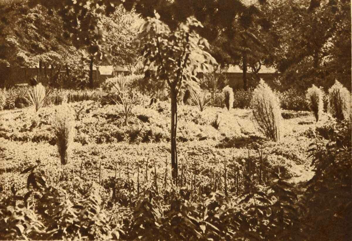 Театральный сад - цветник