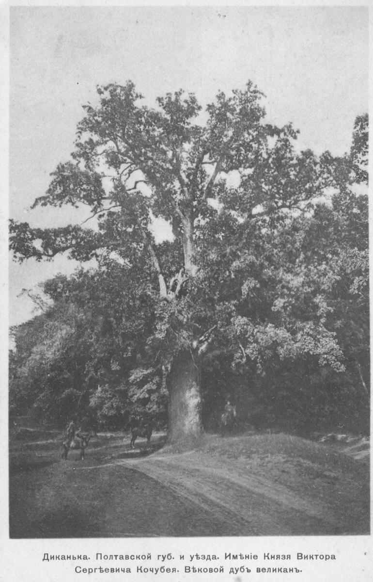 Имение князя Кочубея. Вековой дуб великан
