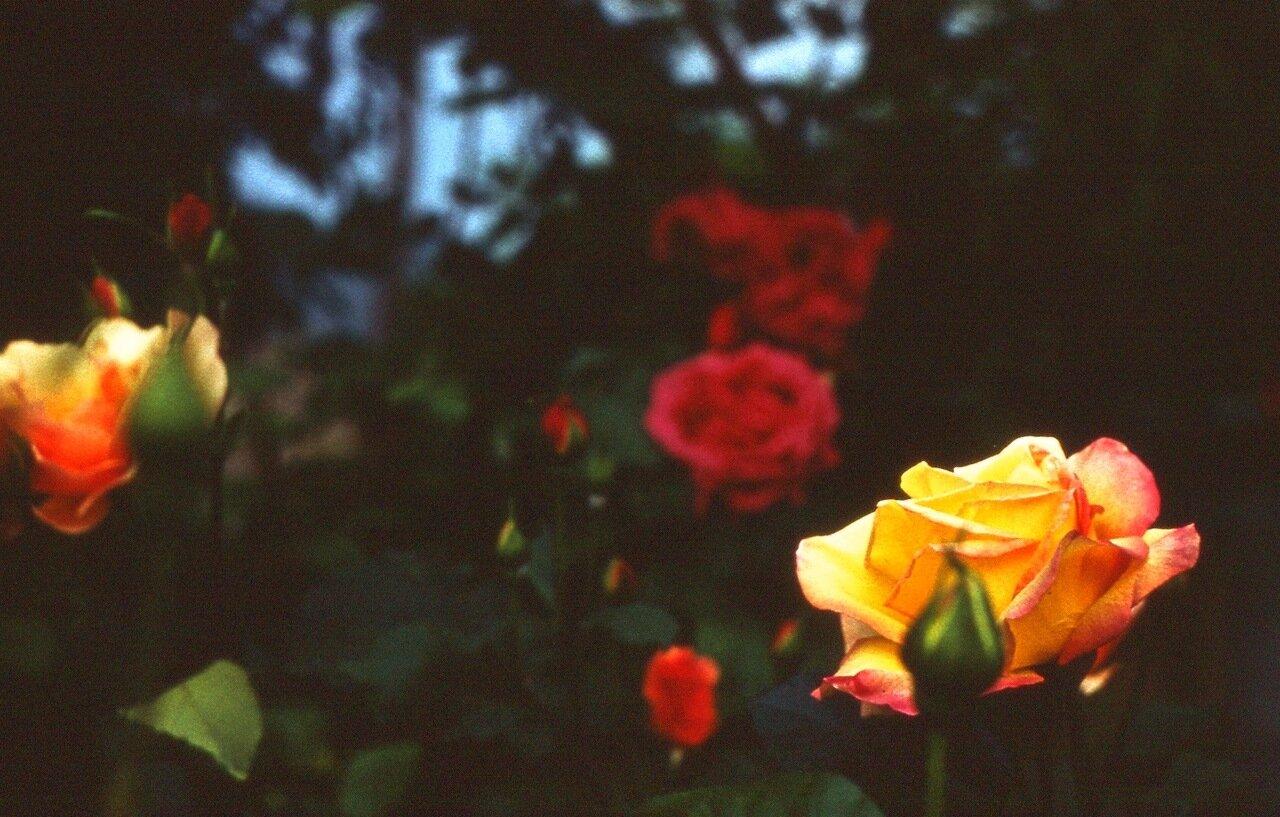 19.  В саду у Мамардашвили