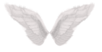 SD NP WINGS.png