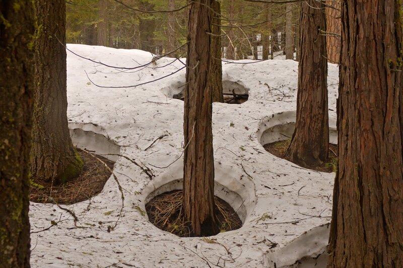 Почему возле деревьев снег быстрее тает