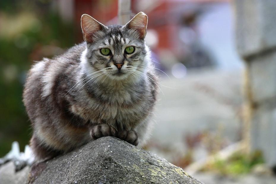 Греческие кошки