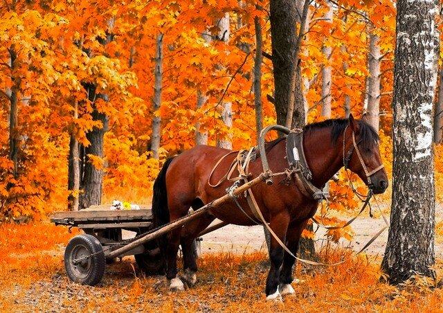 Домашние животные осенью