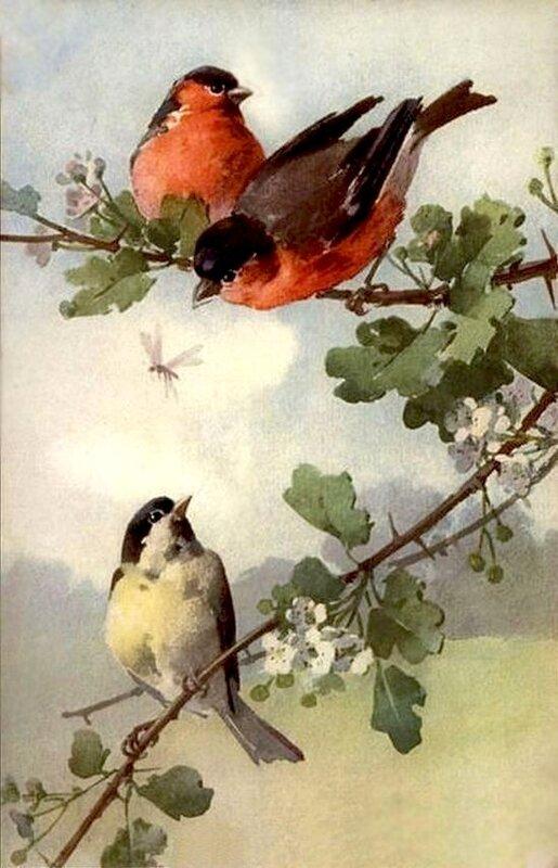 К. Кляйн. Птицы на цветущей ветке.