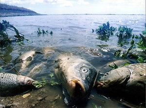 Ученые выяснили причину массовой гибели рыбы в Приморье