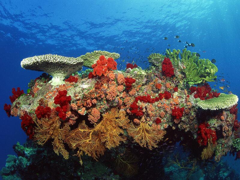 Подводный мир-Kораллы 20286