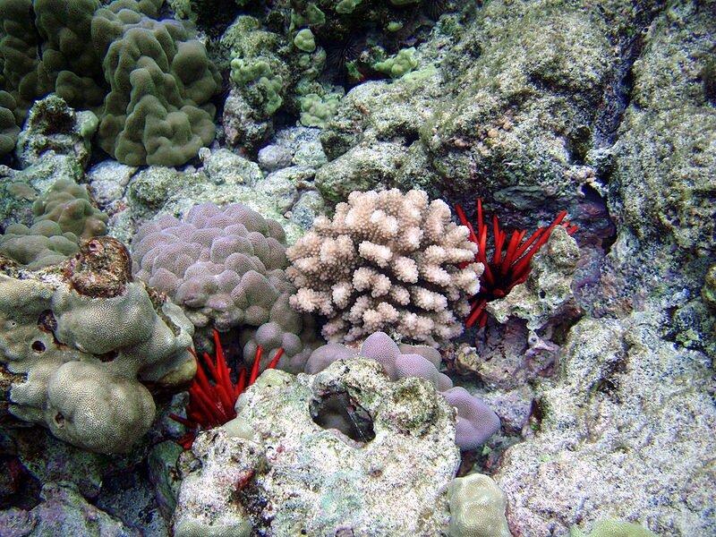 Подводный мир-Kораллы 35177
