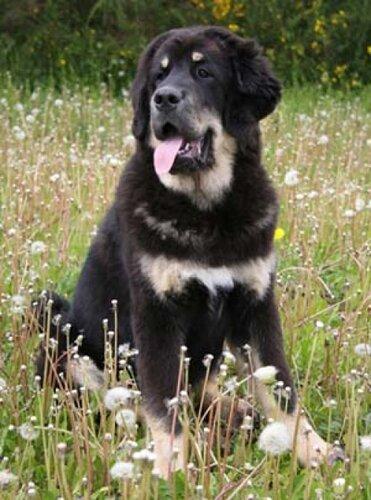 Красивые и добрые собаки 0_bbfb5_9b7d01c5_L