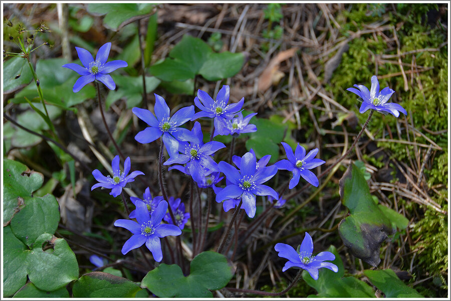Фото лесные цветы с названиями