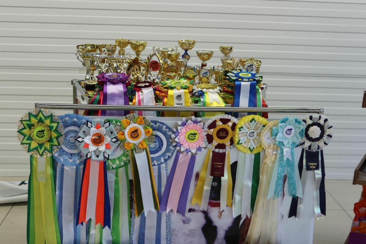 Международная выставка кошек в Костанае