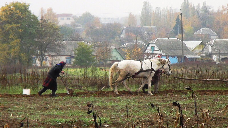 Украина, осень.  Бабули пашут землю.