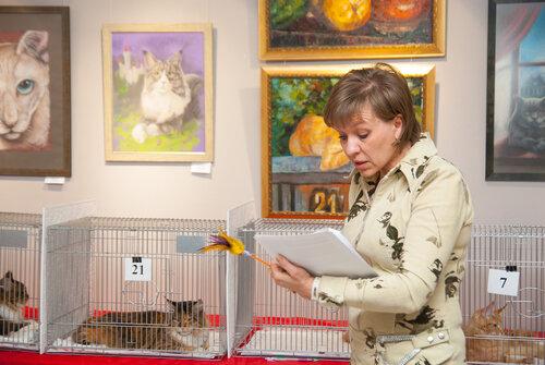 """Международная выставка кошек AFC """"Удивительные лесные кошки"""", 1 марта 2014 г. Сургут 0_b2675_57127c09_L"""