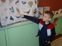 Помощь птицам