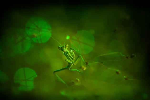 Макро как произведение искусства… Фотограф Iryna