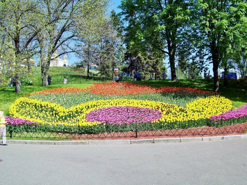Композиция из тюльпанов на склоне Певческого поля