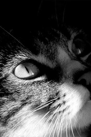 Разговор с котом ! Он всё понял.