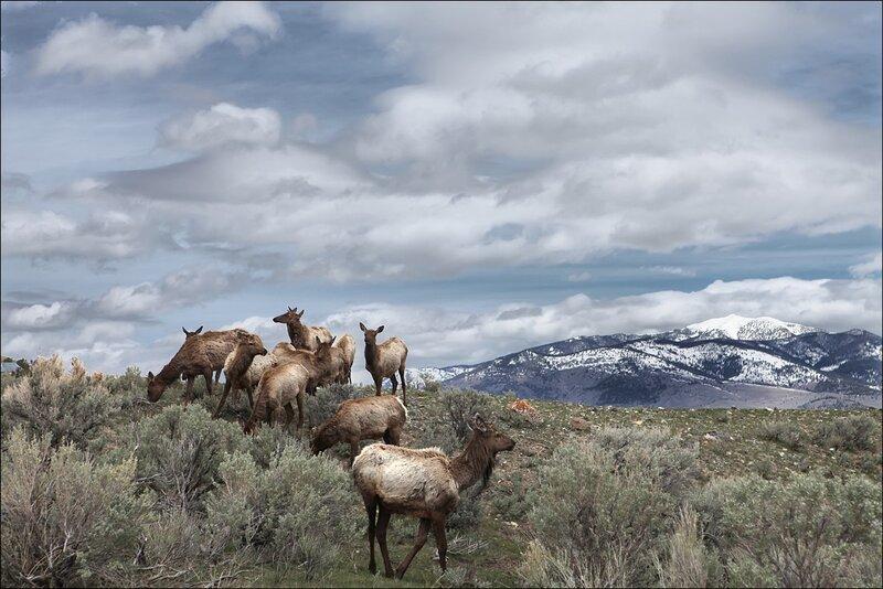 Неповторимая природа Америки. Степи, горы, звери...